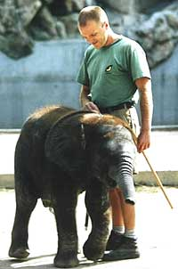 Elephant keeper Gerd Kohl and Abu