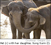 Sung Suri and her mother Pet in Oregon Zoo Portland